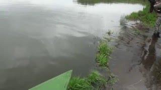Видео о рыбалке. Ловля чавычи на Камчатке(Леха поймал зачетного самца чавычи. Камчатская рыбалка приносит в этом видео приятные сюрпризы., 2011-12-14T15:37:47.000Z)