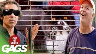 Best of Crazy Cat Pranks | Just For Laughs Compilation