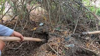 Ngày Thứ 25 Săn Lùng Ổ Rắn Hổ Mang Trong Trường Học (Hunt down cobras in school)