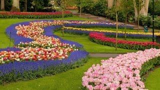 オランダ キューケンホフ公園。花の好きな人だったら一度は訪れてみたい...