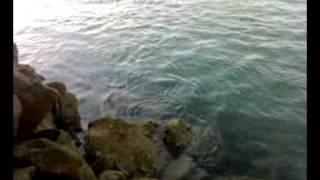 Goro pescando una Lisa (Punta del moral)
