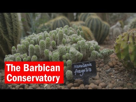 The Barbican Conservatory | City Secrets | Time Out London