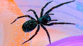 Nasty Spider Blasted With Nerf Gun & Spider Eaten In Wife's Soup