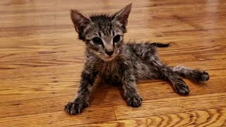 Tiny Paralyzed Kitten Who Never Stop Practice To Walk Again With Amazing Transformation