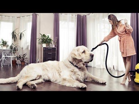 19-biggest-dog-breeds-on-earth!