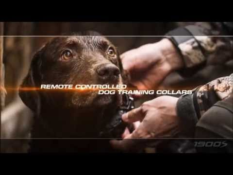 Dogtra 1900S Remote Dog Training Collar
