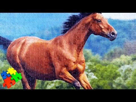 Как собрать пазл из 1000 элементов. Лошадь Castorland Puzzle на 1000 деталей.