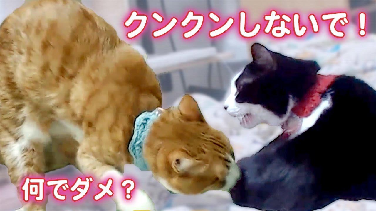 猫の行動って何故か笑えるw! 快適な場所を探す2匹の猫♡〜猫のライブ映像#5  Cats Stay Movies Clip 5