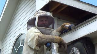 Bee Removal Forney, Texas Bee Removal Rockwall County, Texas