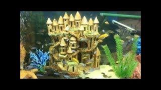 Обзор аквариумных рыбок Более 20ти видов
