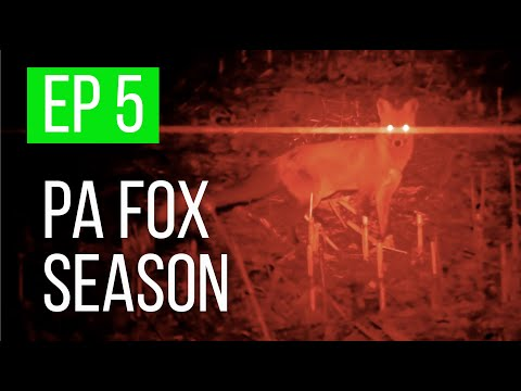 Pennsylvania Fox Hunting