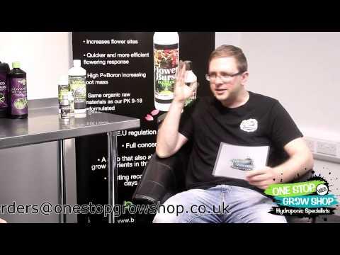 Buddhas Tree PK 9-18 Interview