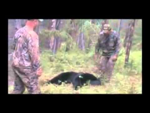 Black bear guided hunts British Columbia