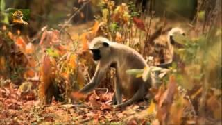 Видеодиалоги о диких животных Сибири и Африки