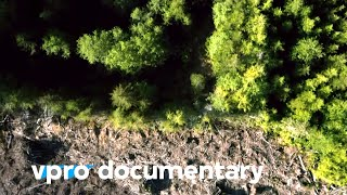 Trees will save our planet | VPRO Documentary