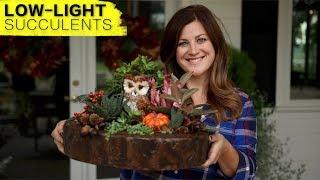 Low-Light Succulent Arrangement (Full Version) // Garden Answer