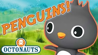 Octonauts   Learn about Penguins  Cartoons for Kids  Underwater Sea Education