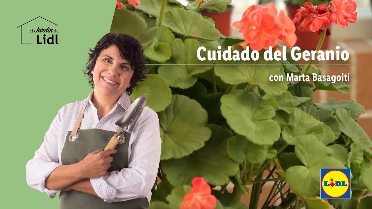 Cuidado del geranio lidl jardin youtube - Geranio de pensamiento ...