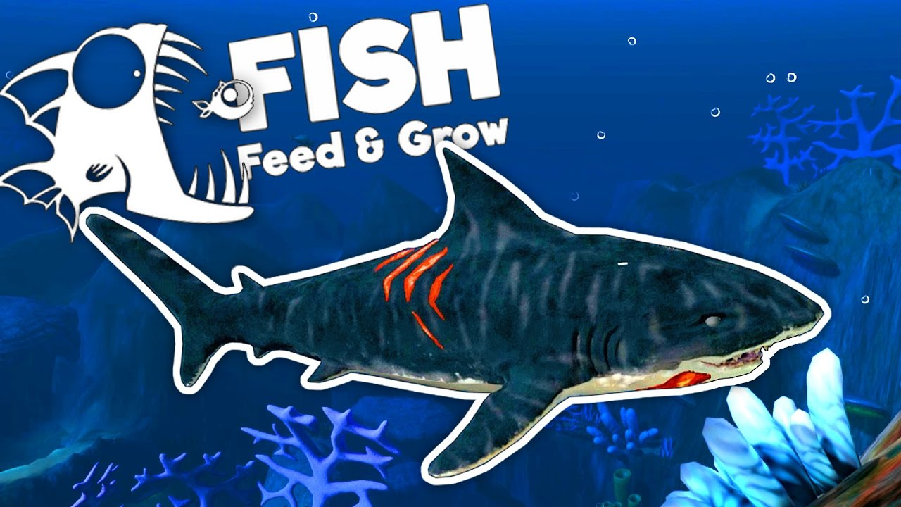 Deadly tiger shark feed and grow fish gameplay youtube for Fish and grow