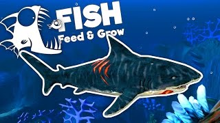 Deadly Tiger Shark! - Feed and Grow Fish Gameplay