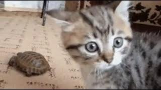 ПРИКОЛЫ - СМЕШНЫЕ КОТЫ И КОШКИ.ПОДБОРКА #4/Funny Cats Complation