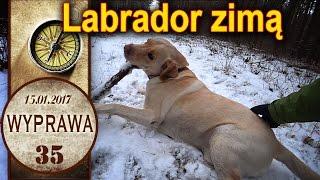 Labrador Diego zimą - Wyprawa - długi spacer