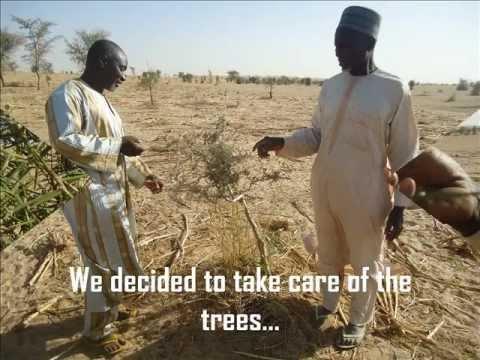 Garin Mahamane's Community Adapt by Planting Trees (Niger)