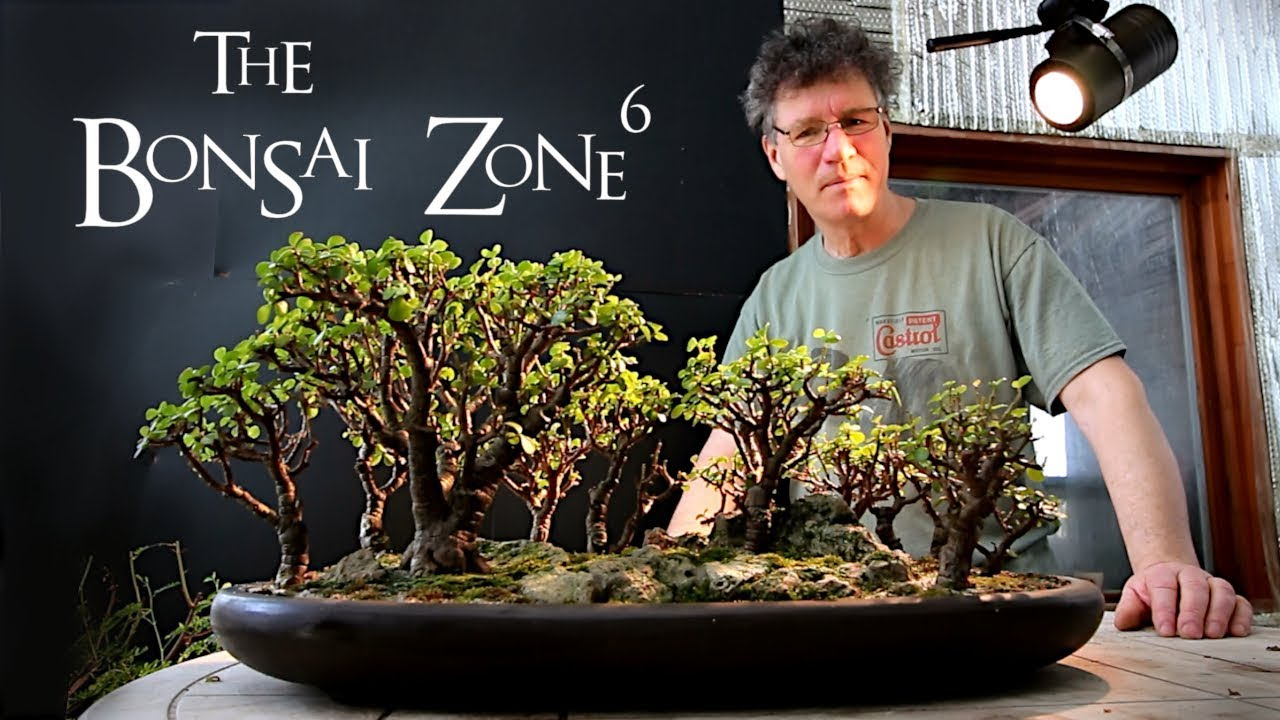 Pruning My Portulacaria Afra Bonsai Forest March 2019 Youtube