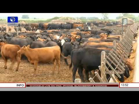 Business Incorporated: Focus On Argentina Beef Market 04/02/16