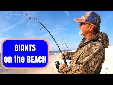 Catching GIANTS On The BEACH - Surf Fishing Goes CRAZY