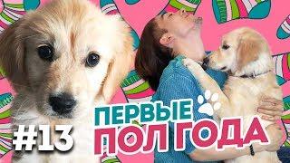 Это нужно знать покупая щенка/ Первые пол года с собакой Голден Ретривер