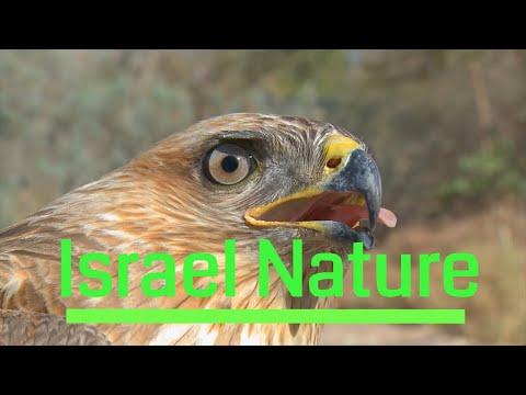 Israel Nature / טבע בישראל