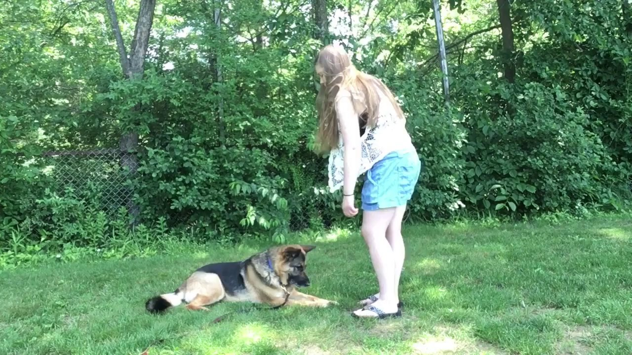 Training Eye Contact-3 Minute Game For Dogs
