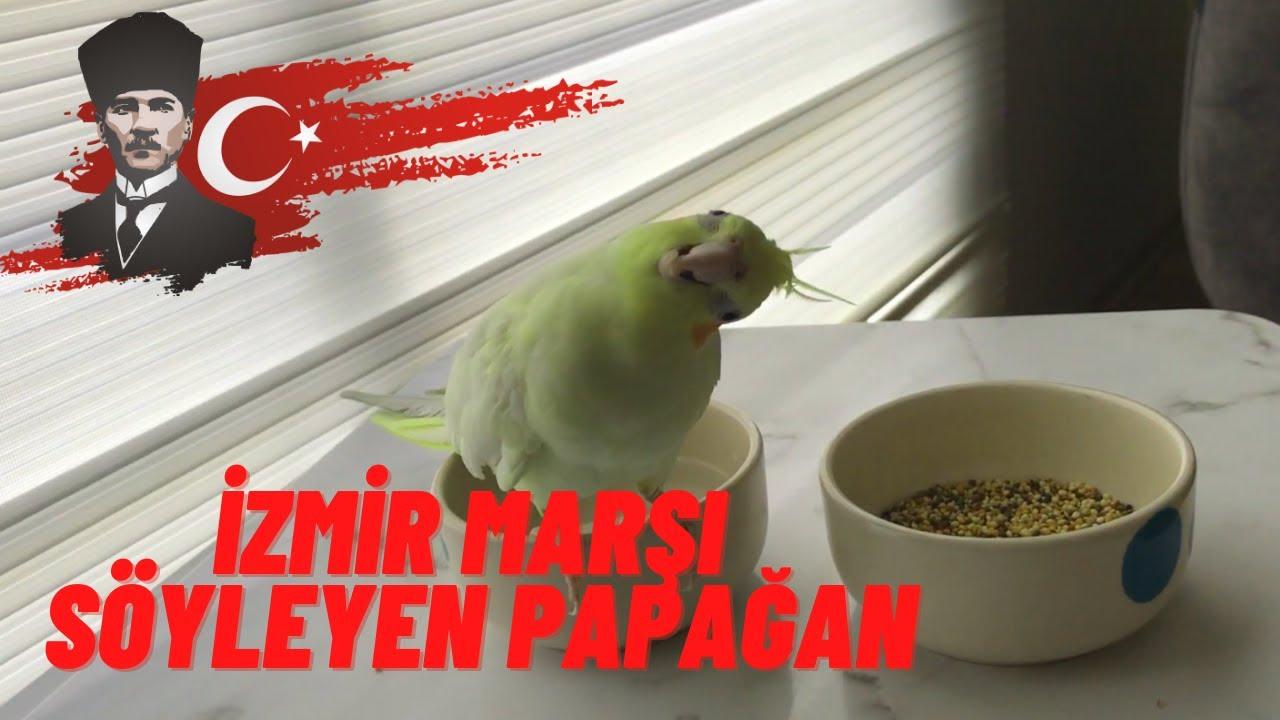 İzmir marşı ıslıklı. Sultan papağanı eğitim.