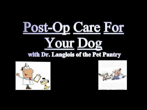 Pet Pantry of Lancaster County: Dog Spay/Neuter Post Op Care