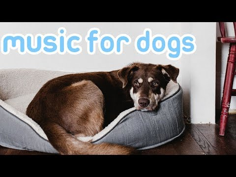 Deep Separation Anxiety Music for Dogs! Calm and Relax Your Dog!