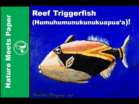 Reef Triggerfish - 3:10 - Nature Meets Paper
