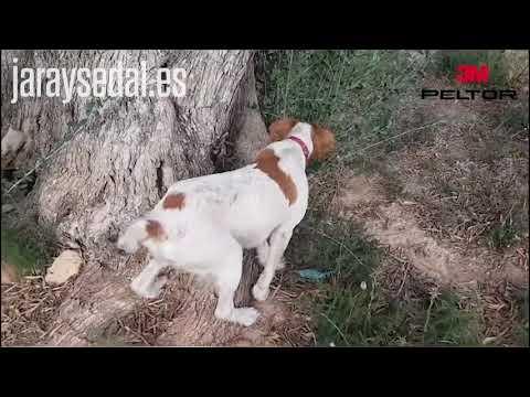 Muestra a conejo / I Certamen de vídeos de caza y naturaleza Jara y Sedal - Peltor 3M