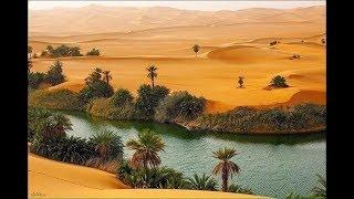 النخل البري الشيص همشة العرب وهو سبب اانقاذهم من الجوع