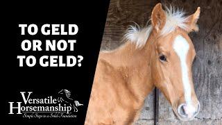 TO GELD OR NOT TO GELD?  ASKING THE VET // Versatile Horsemanship