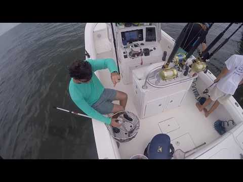 Fishing for speckled trout with live croaker