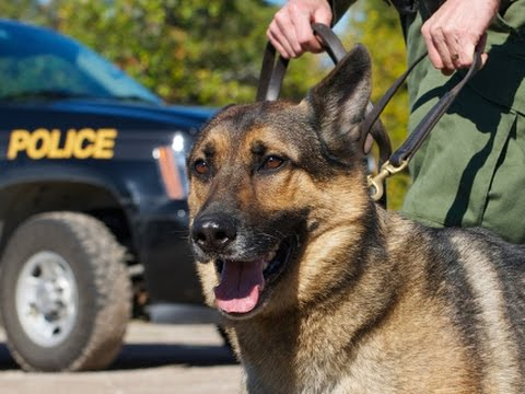 Anal Probes Run Amok: Drug-Sniffing Dogs Must Be Stopped.