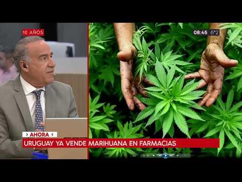 Uruguay ya vende marihuana en farmacias