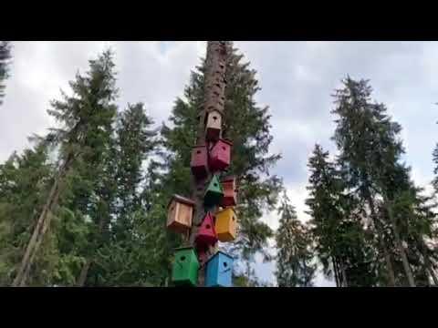 Ukrainian Women in Kiev : June 2020 Street Tour from YouTube · Duration:  4 minutes 7 seconds