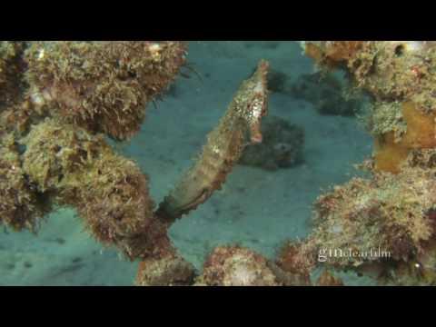 Underwater NSW: Vol 1 Sydney DVD Trailer