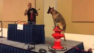 Discussing Importance Of Dog Obedience And Training Tips | Sit Means Sit Houston Family Expo