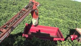 EFICO TRADE (BRAZIL) - PICKING METHODS - MACHINES