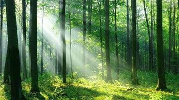 머리가 맑아지는 숲 속 치유음악 🎵 3시간 자연 명상음악, 마음이 편안해지는 음악, 새소리와 하프연주 (Forest Light)