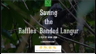 Saving the Raffles' Banded Langur