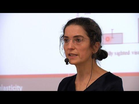 Brigitte Röder: Altersabhängige Lernplastizität